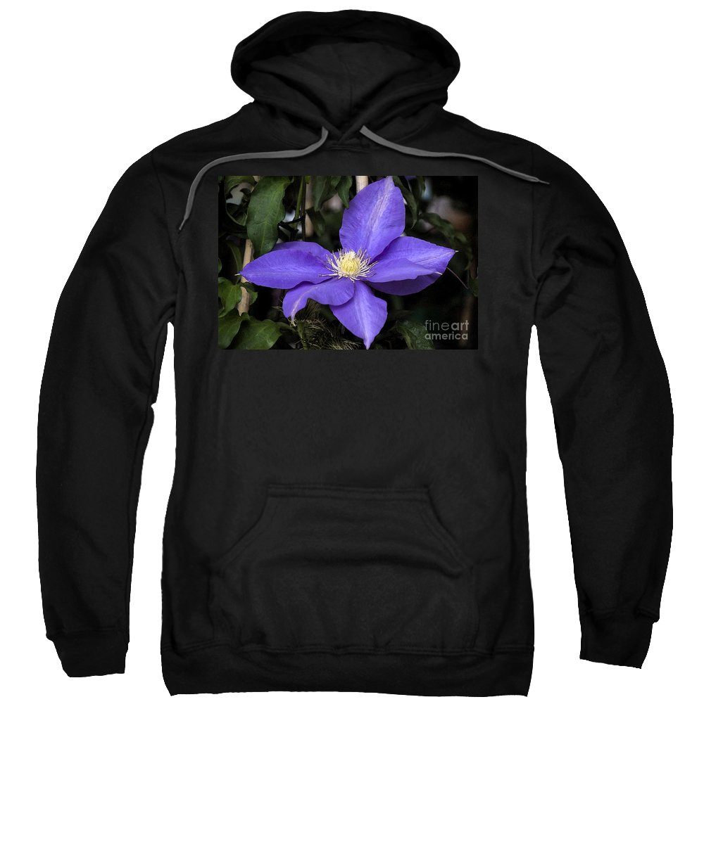 Purple Sweatshirt featuring the photograph Purple Clematis by Jim And Emily Bush