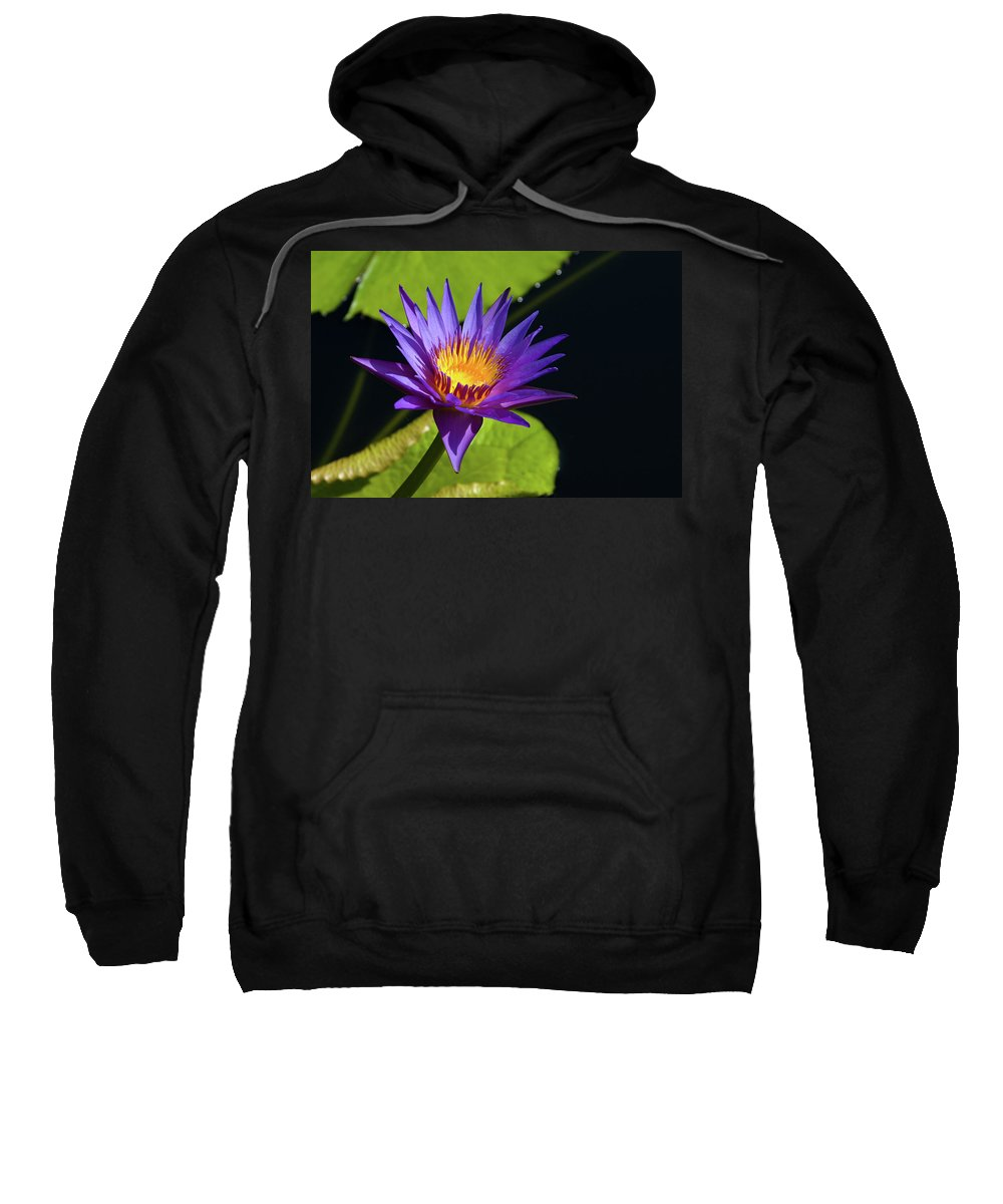 Water Lily Sweatshirt featuring the photograph Purple Gold by Steve Stuller