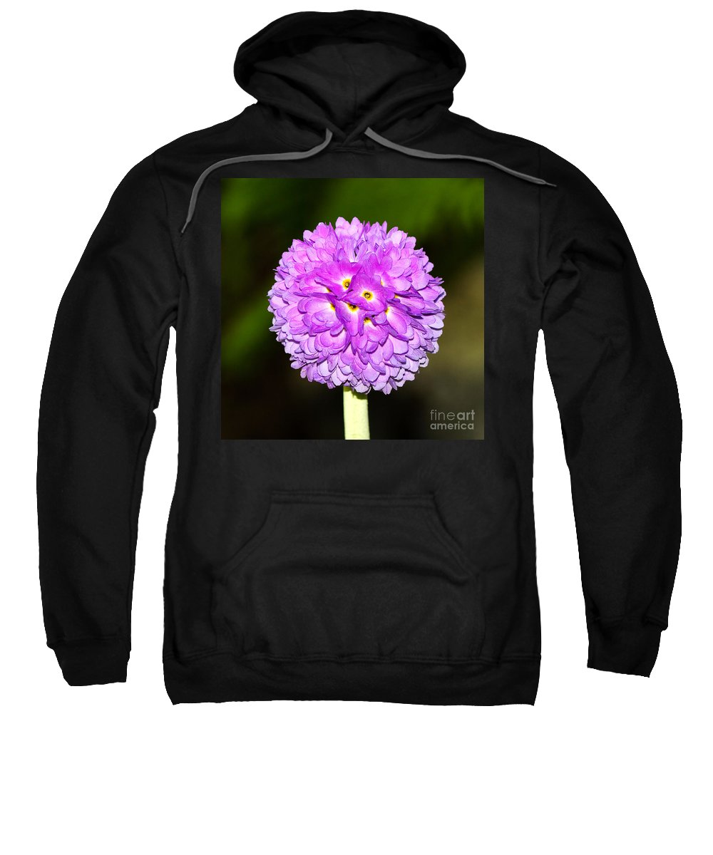 Flower Sweatshirt featuring the photograph Purple Himalayan Primrose by Louise Heusinkveld