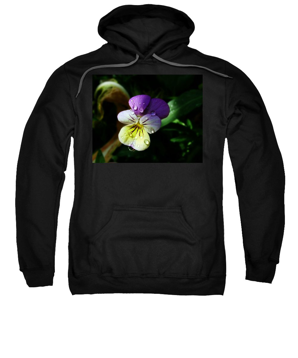 Flower Sweatshirt featuring the photograph Purple Pansy by Anthony Jones