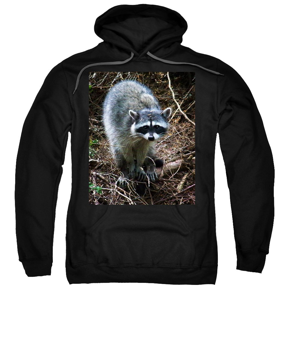 Painting Sweatshirt featuring the photograph Raccoon by Anthony Jones