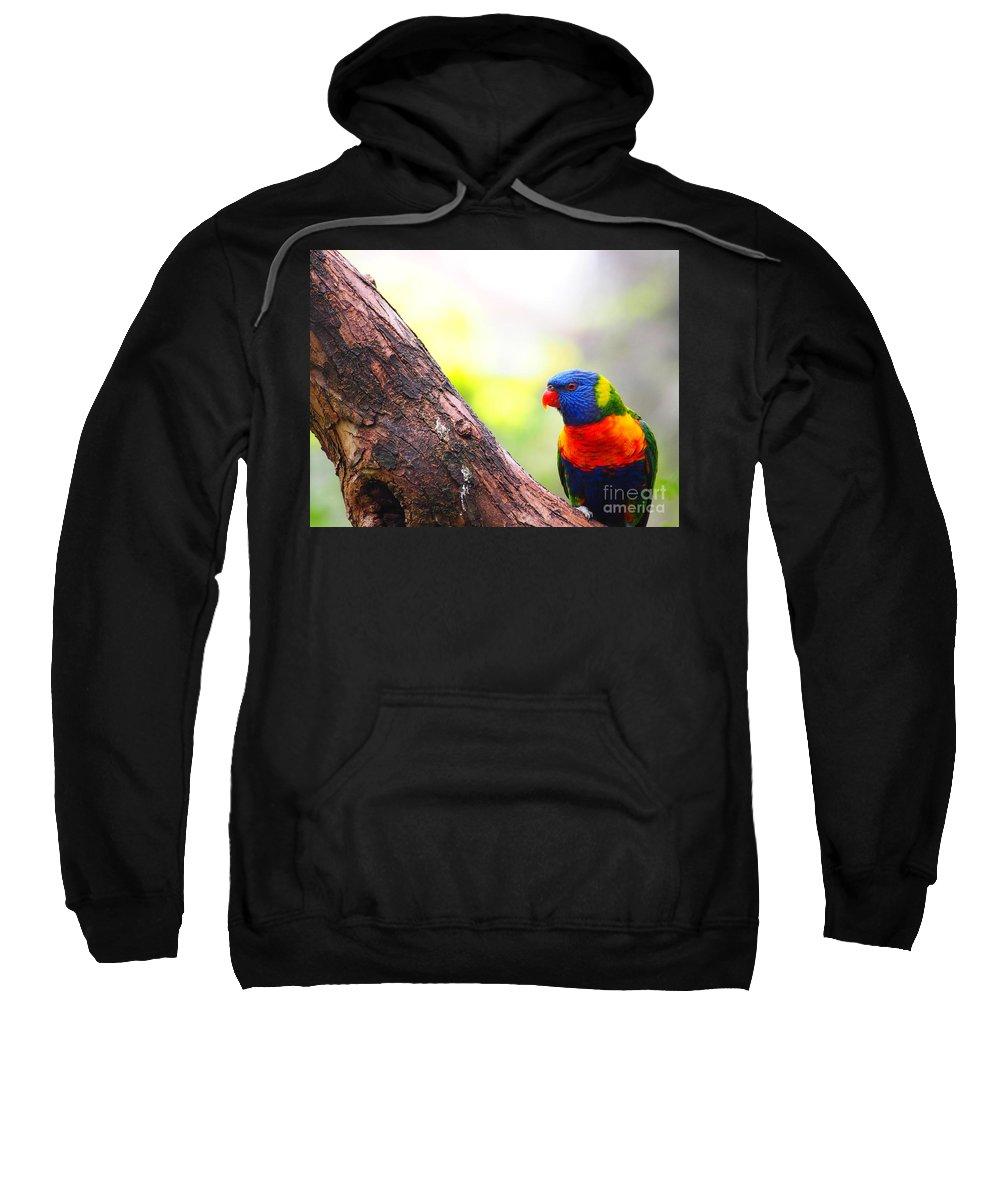 Rainbow Sweatshirt featuring the photograph Rainbow Lorikeet by Ronald Rockman