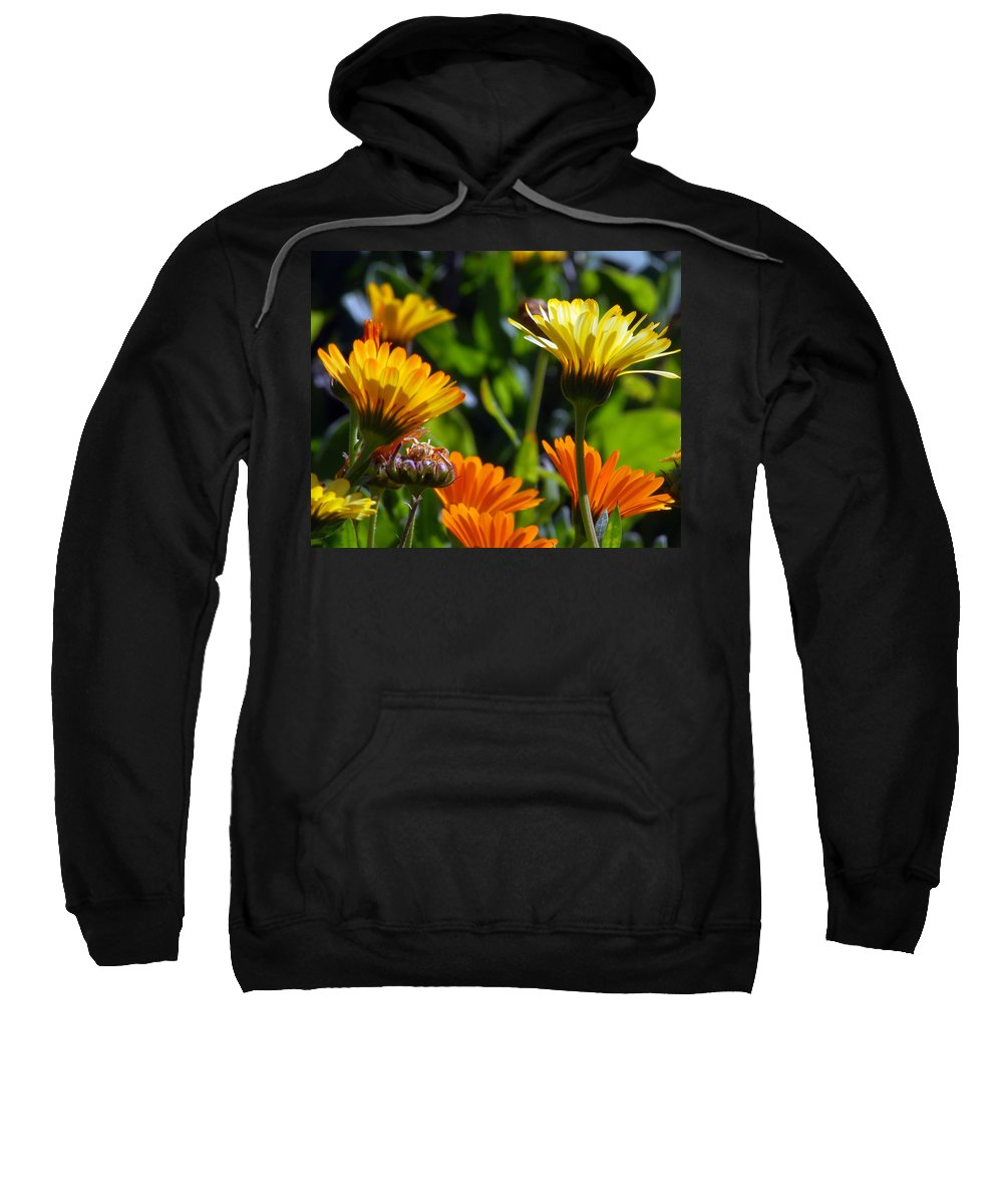 Flower Sweatshirt featuring the photograph Reach For The Sun 1 by Amy Fose