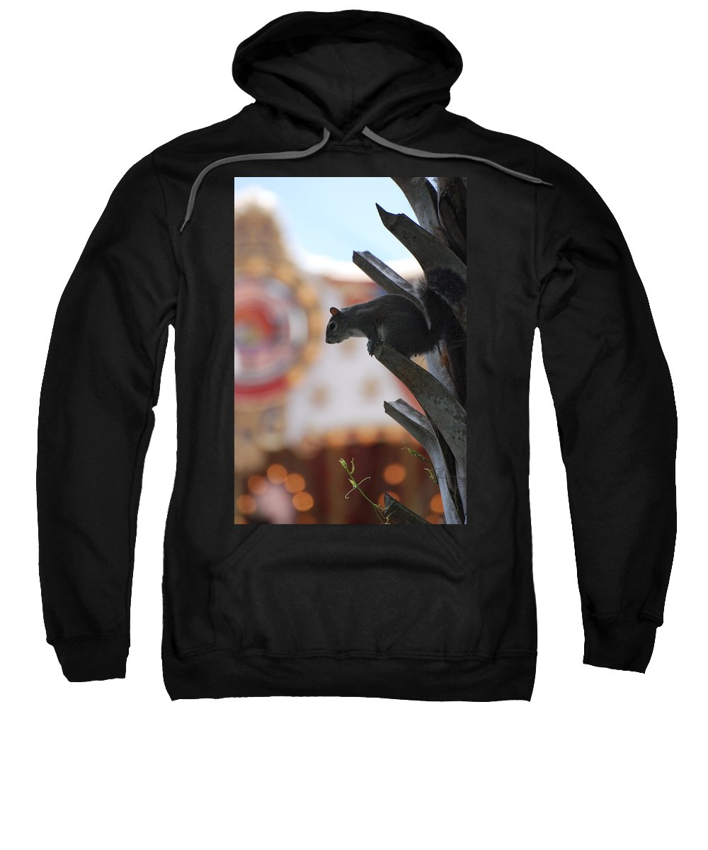 Squirrel Sweatshirt featuring the photograph Ready To Jump by Rob Hans