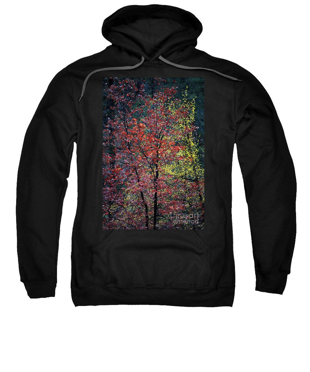 Landscape Sweatshirt featuring the photograph Red And Yellow Leaves Abstract Vertical Number 1 by Heather Kirk