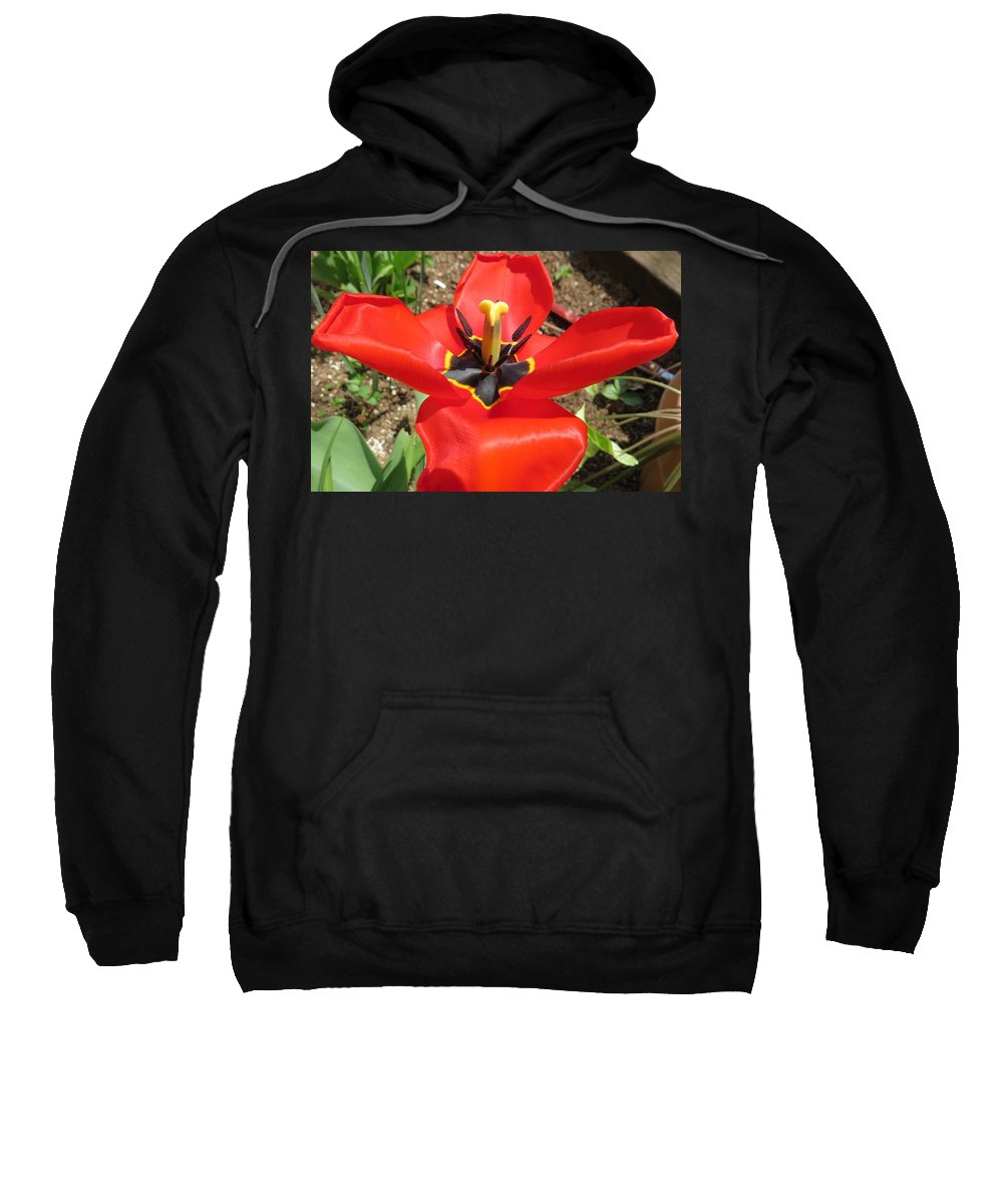 Flower Sweatshirt featuring the photograph Red Beauty by Jason Asselin