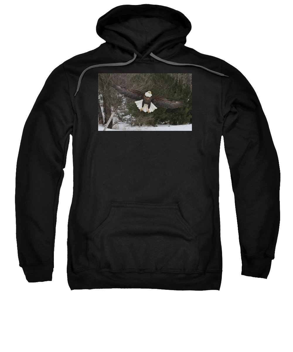 Bald Eagle Sweatshirt featuring the photograph Red Feather Lift Off by Teresa McGill