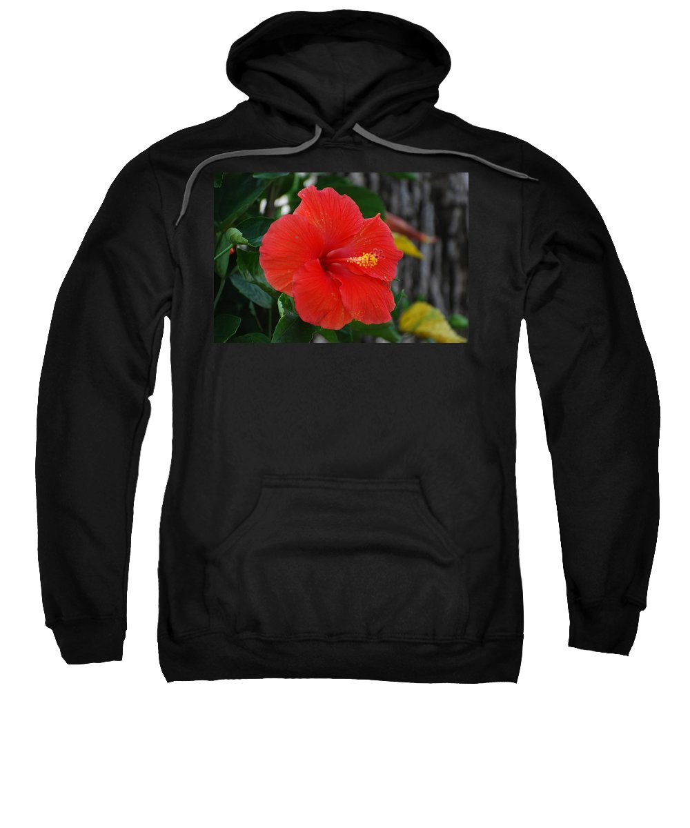 Flowers Sweatshirt featuring the photograph Red Flower by Rob Hans