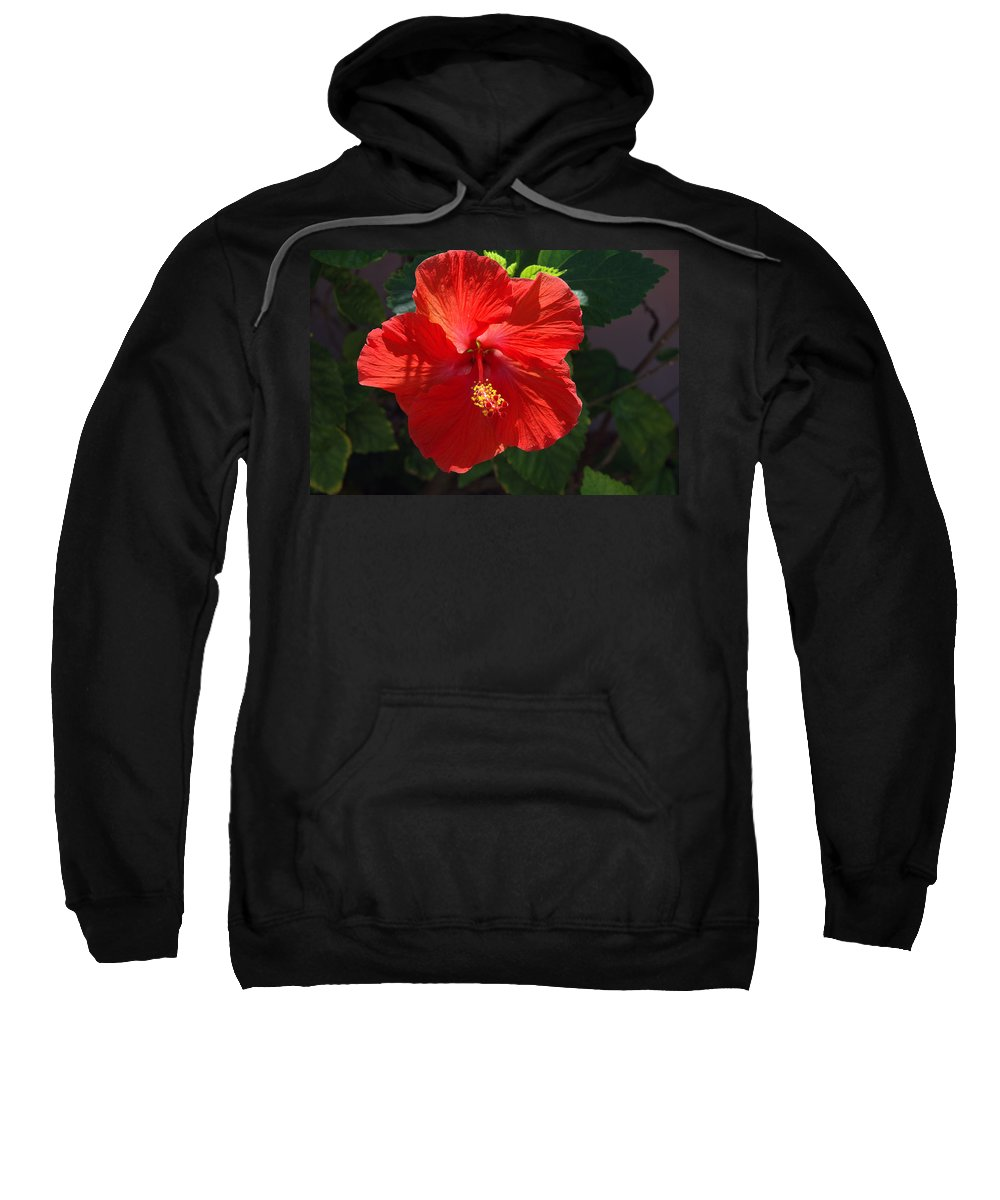 Photography Sweatshirt featuring the photograph Red Hibiscus by Susanne Van Hulst
