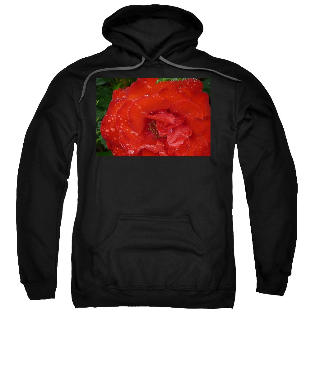 Rose Sweatshirt featuring the photograph Red Rose After Rain by Valerie Ornstein