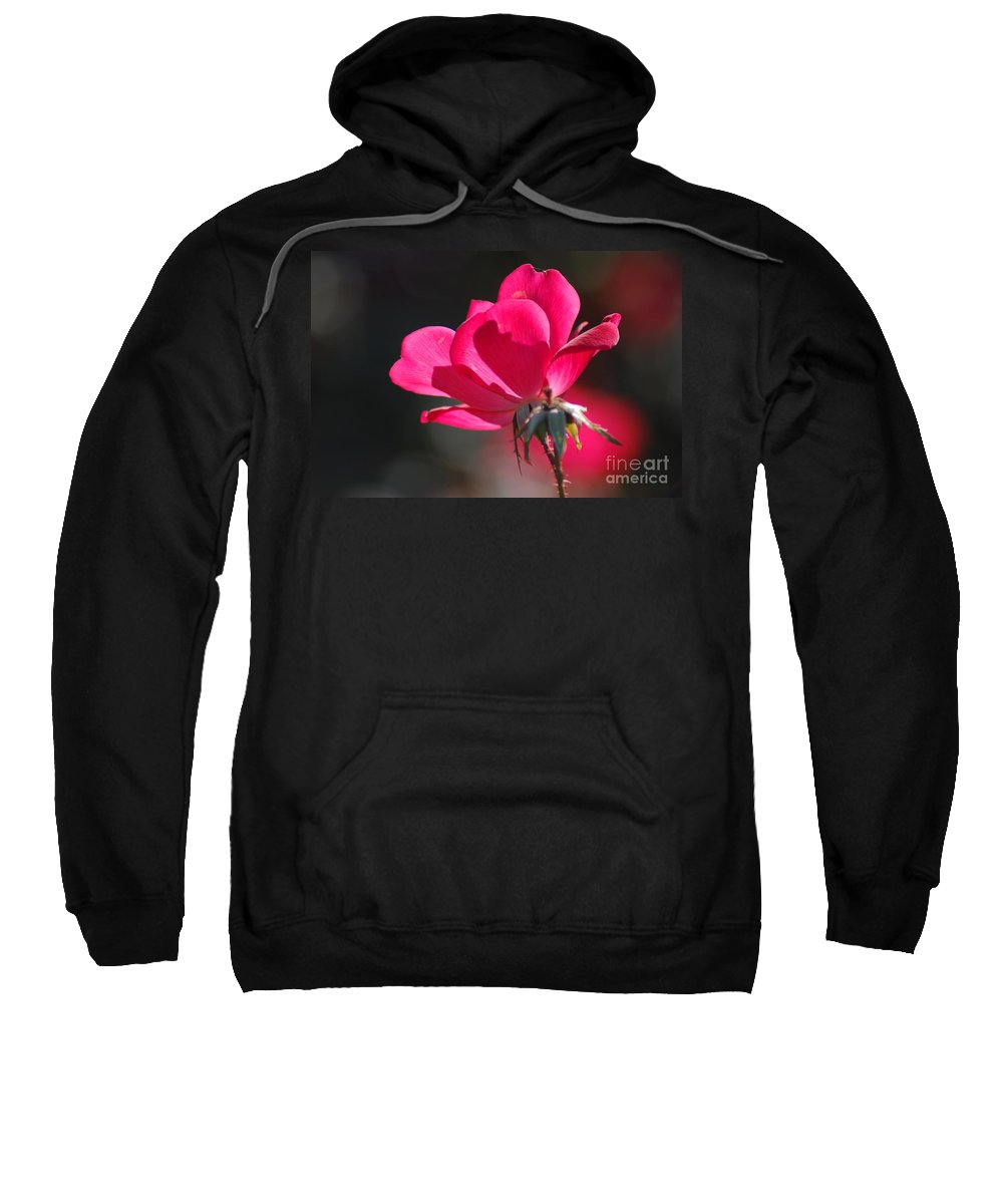 Rose Sweatshirt featuring the photograph Red Rose by Donna Bentley