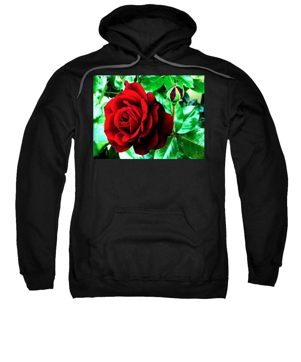 Sweatshirt featuring the photograph red Rose by Helmut Rottler