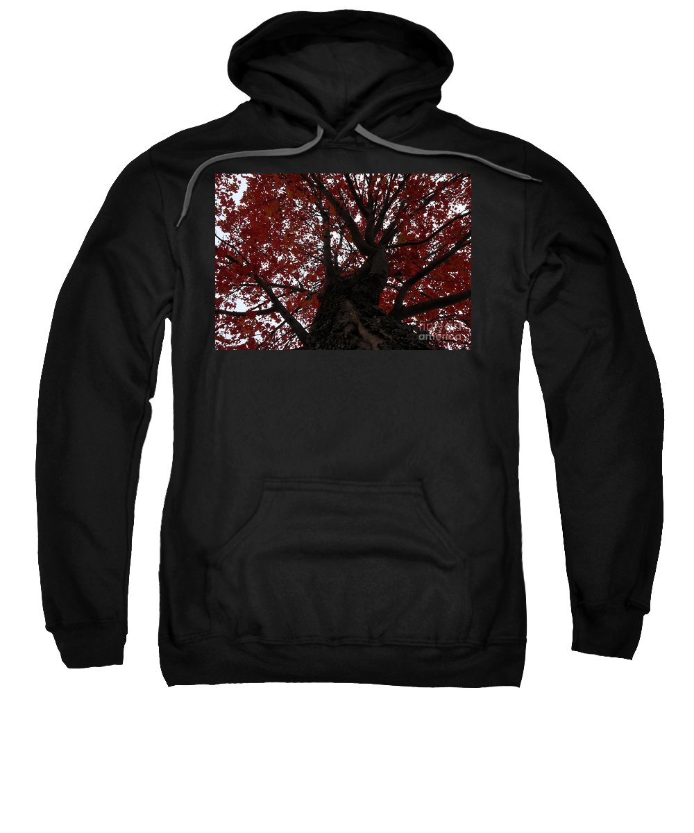 Fall Sweatshirt featuring the photograph Red Tree by David Lee Thompson