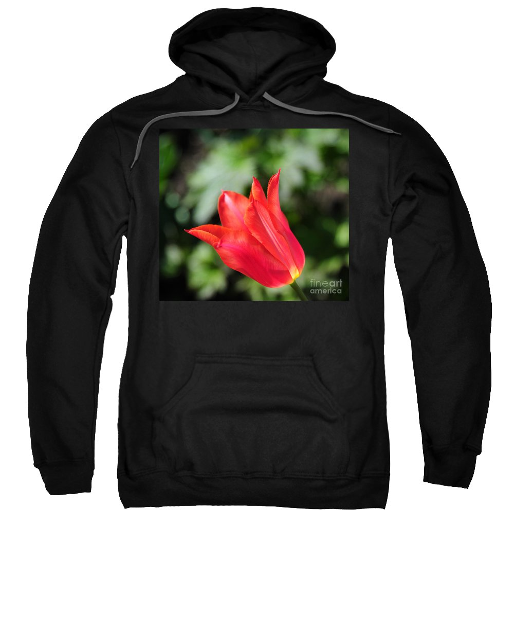 Red Sweatshirt featuring the photograph Red Tulip by Joe Ng