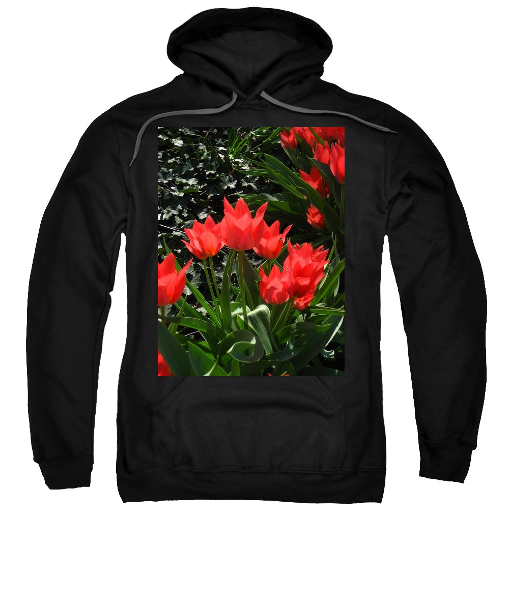 Flowers Sweatshirt featuring the photograph Red Tulips by Sherry Oliver