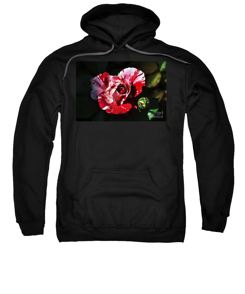 Clay Sweatshirt featuring the photograph Red Verigated Rose by Clayton Bruster