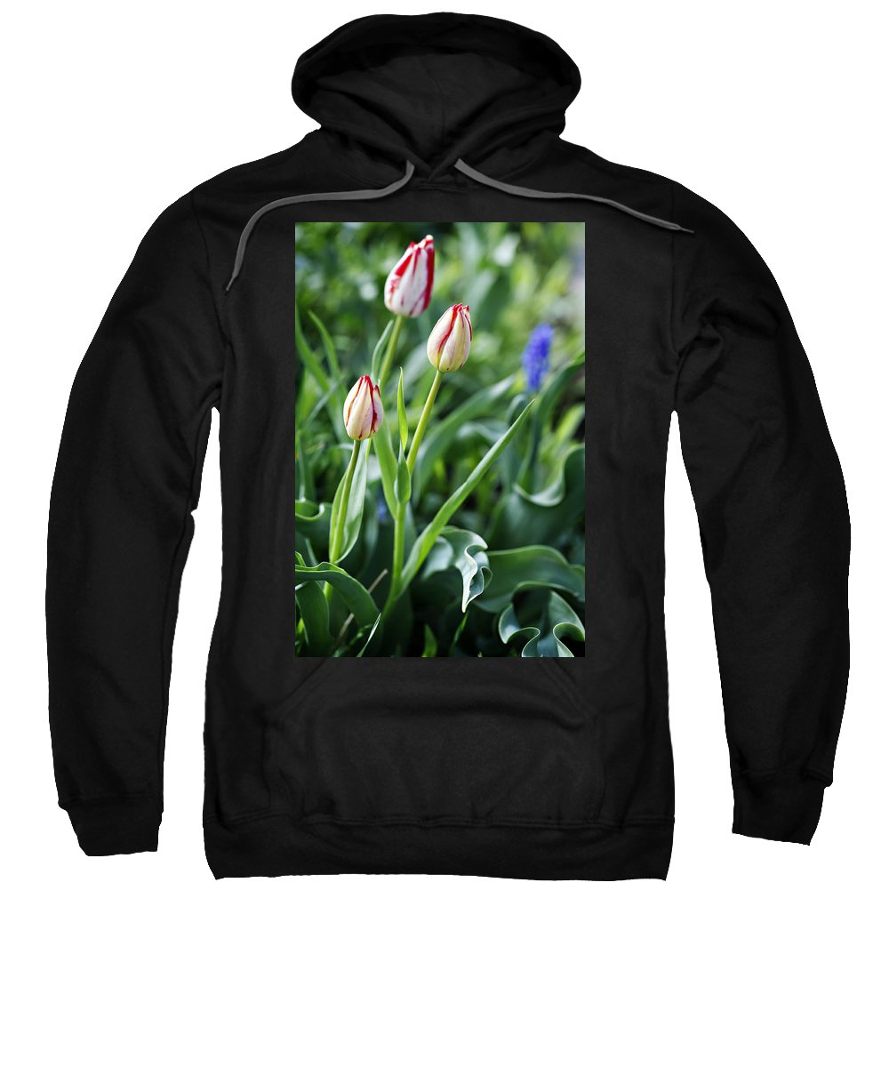 Flower Sweatshirt featuring the photograph Red White Tulips by Marilyn Hunt