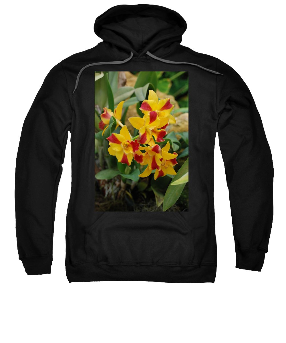 Macro Sweatshirt featuring the photograph Red Yellow Orchids by Rob Hans