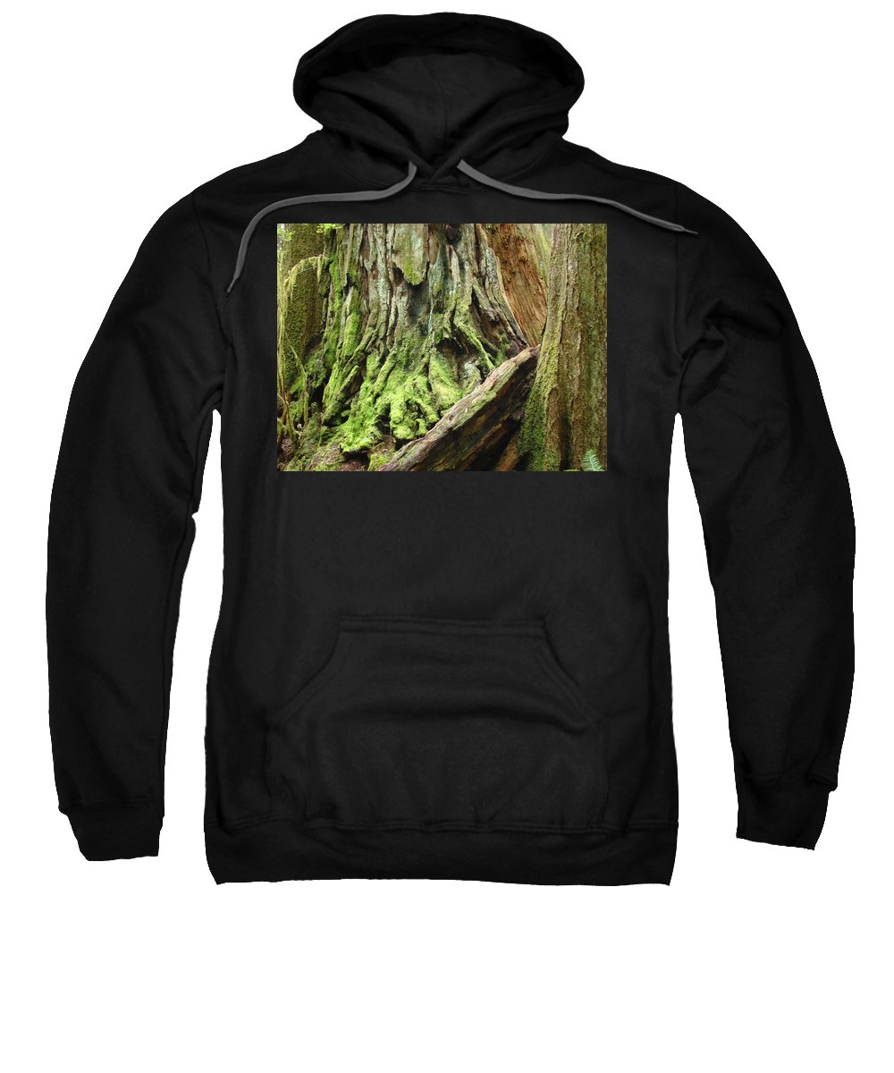 Redwood Sweatshirt featuring the photograph Redwood Trees Art Prints Baslee Troutman by Baslee Troutman