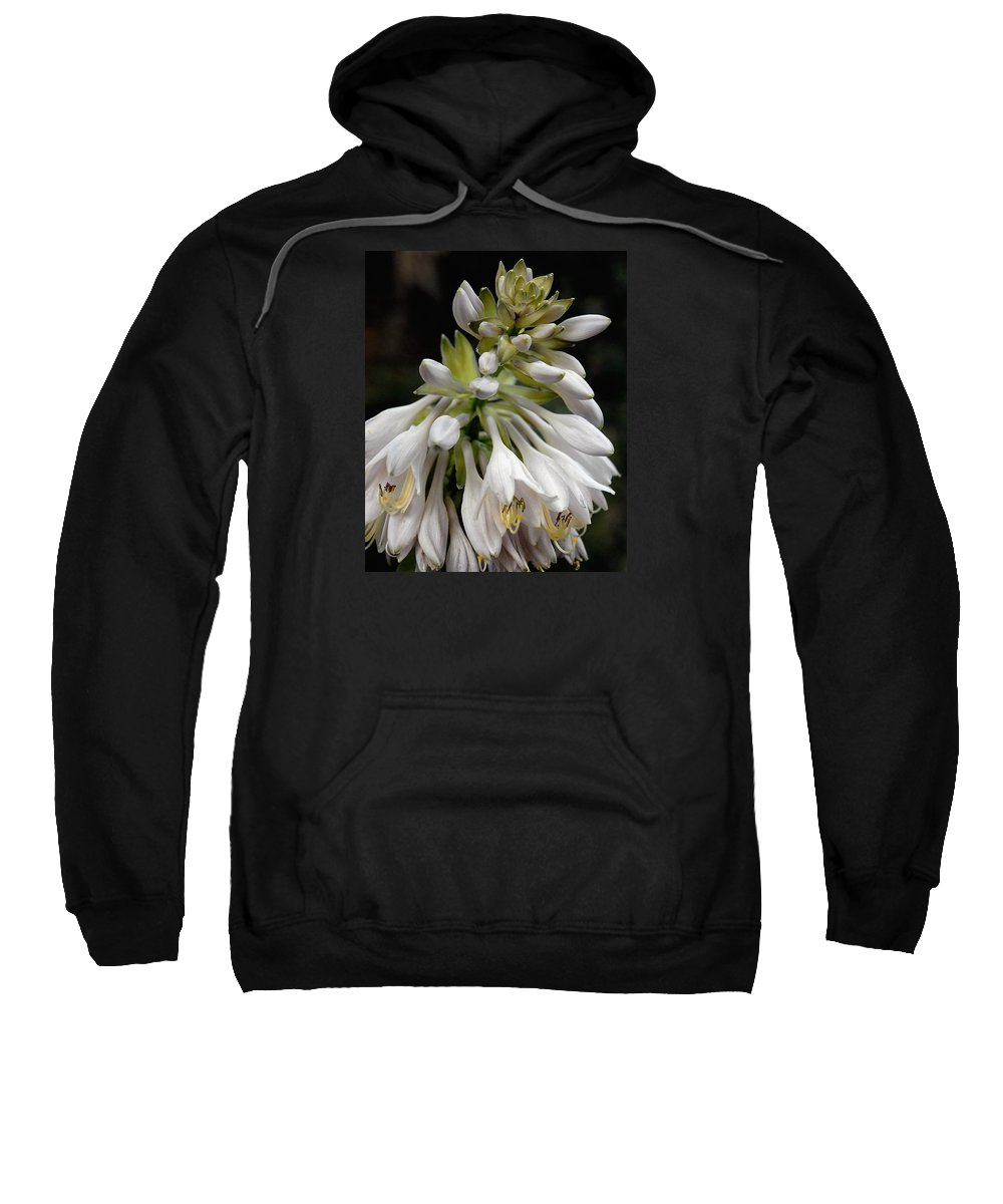 Hosta Sweatshirt featuring the photograph Renaissance Lily by Marie Hicks
