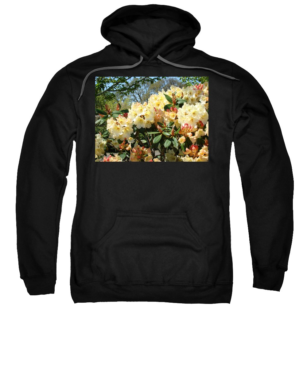 Rhodies Sweatshirt featuring the photograph Rhodies Flowers Art Yellow Orange Rhododendrons Garden by Baslee Troutman