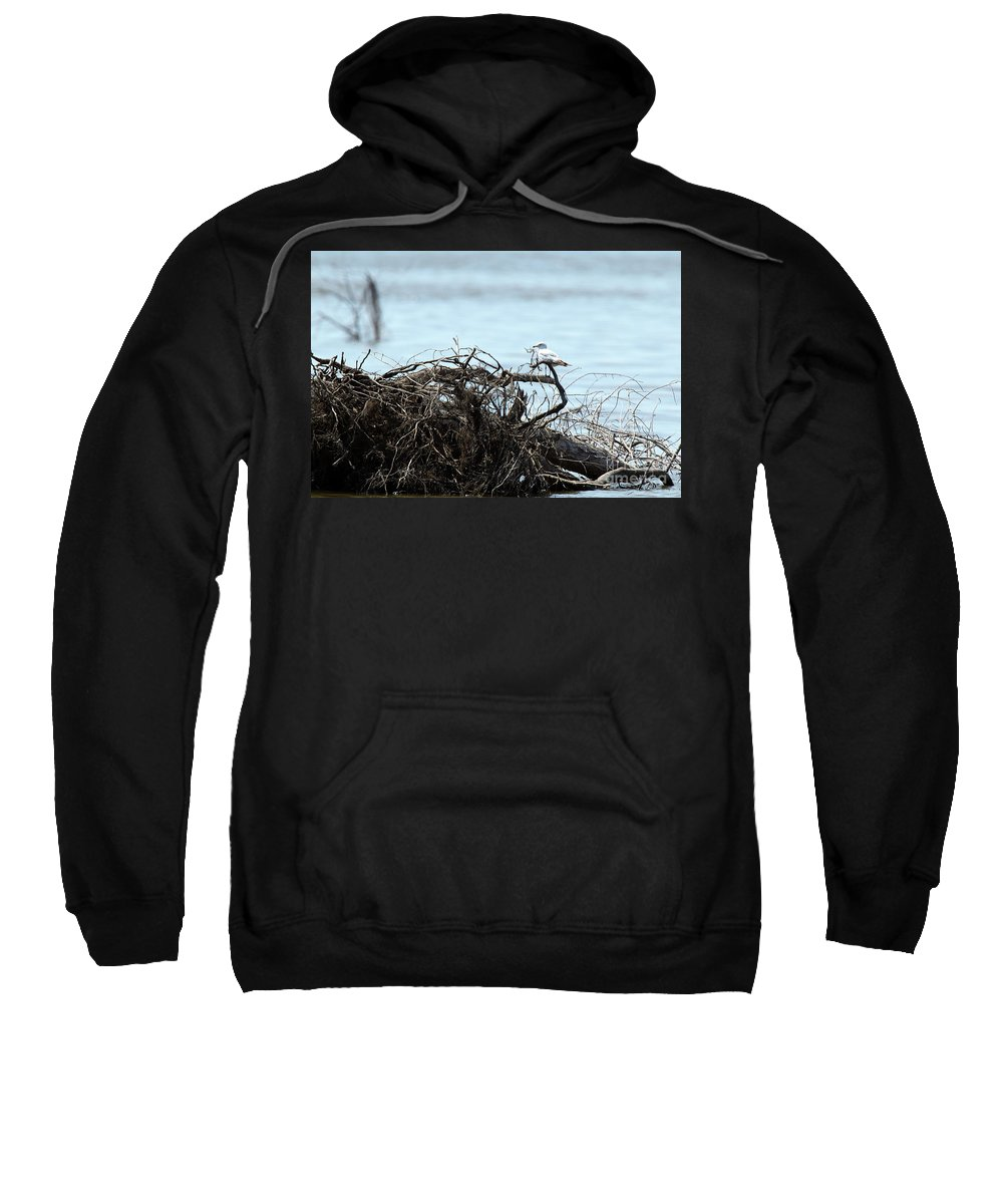 Nature Sweatshirt featuring the photograph Ring Billed Gull by Alan Look