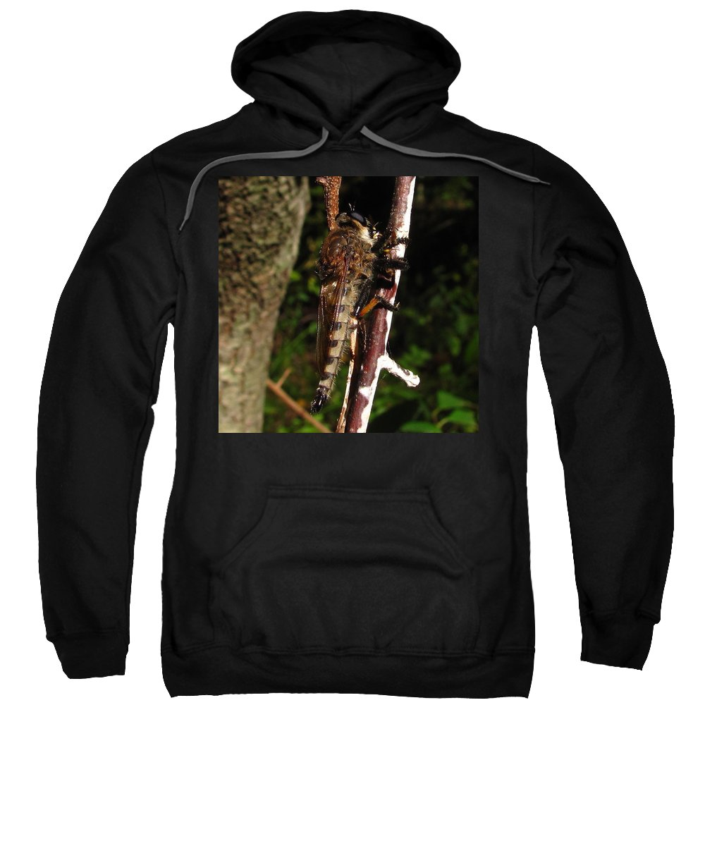 Robberfly Images Robber Fly Prints Robberfly Photos Predatory Fly Prints Forest Ecology Nature Entomology Biodiversity Oldgrowth Forest Preservation Sweatshirt featuring the photograph Robber Fly by Joshua Bales