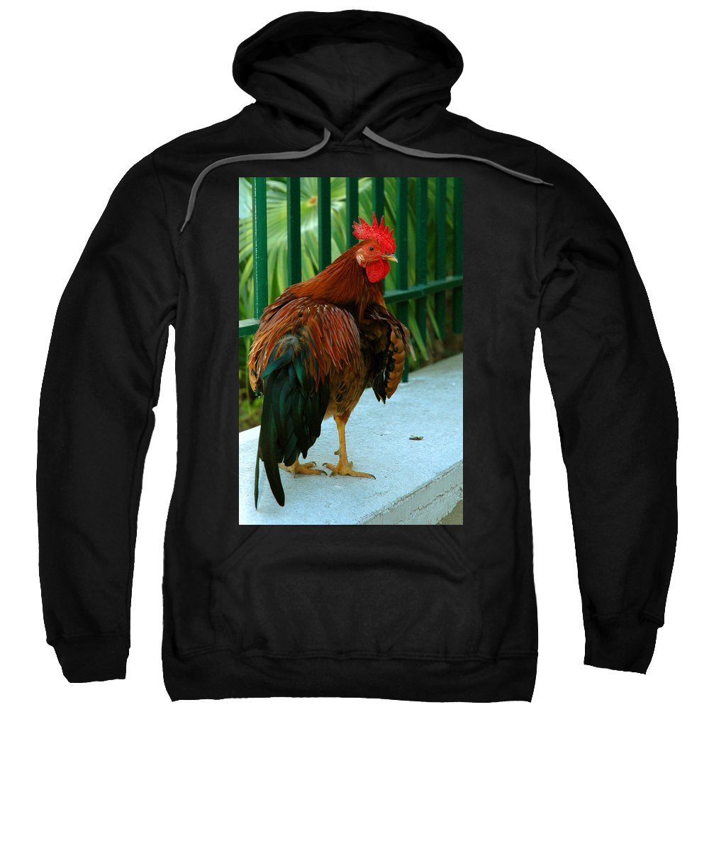 Rooster Sweatshirt featuring the photograph Rooster By The Fence by Susanne Van Hulst