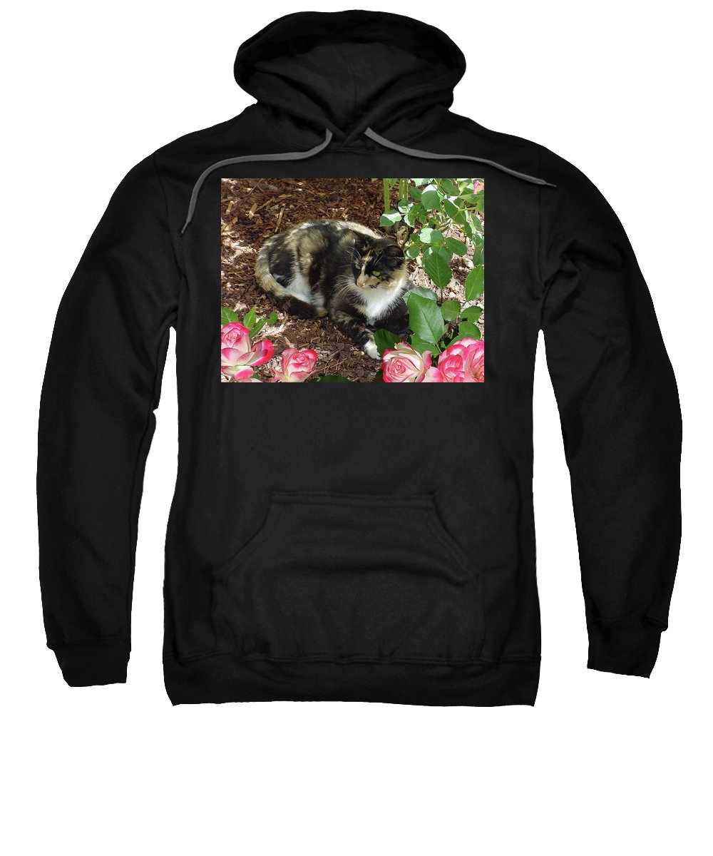 Cat Sweatshirt featuring the photograph Rose Bower For A Cat by Shirley Heyn