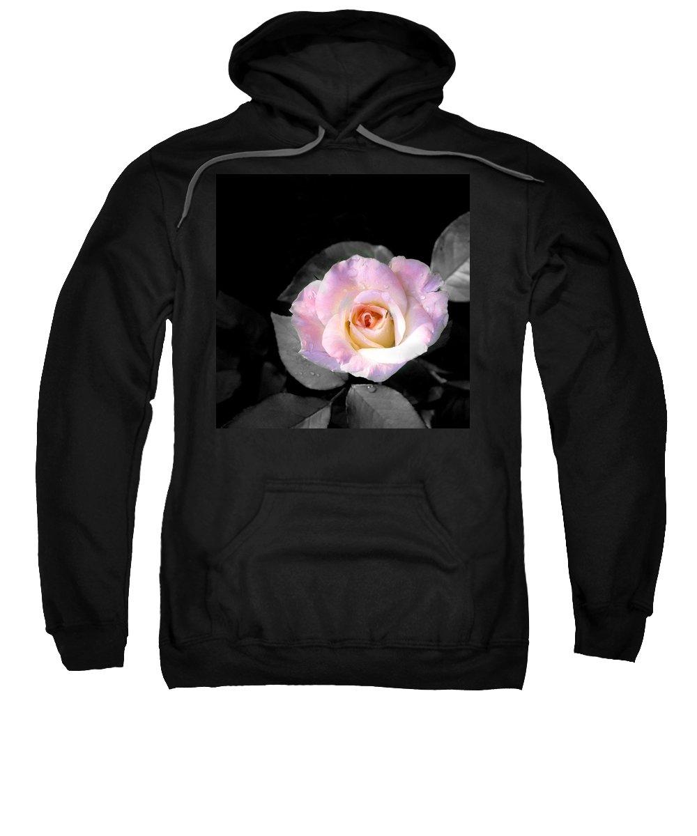Princess Diana Rose Sweatshirt featuring the photograph Rose Emergance by Steve Karol