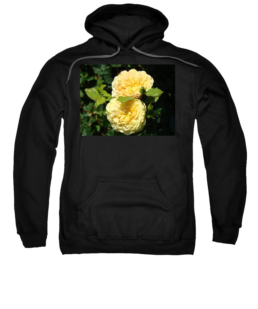 Rose Sweatshirt featuring the photograph Rose Garden Floral Art Print Yellow Roses Canvas Baslee Troutman by Baslee Troutman