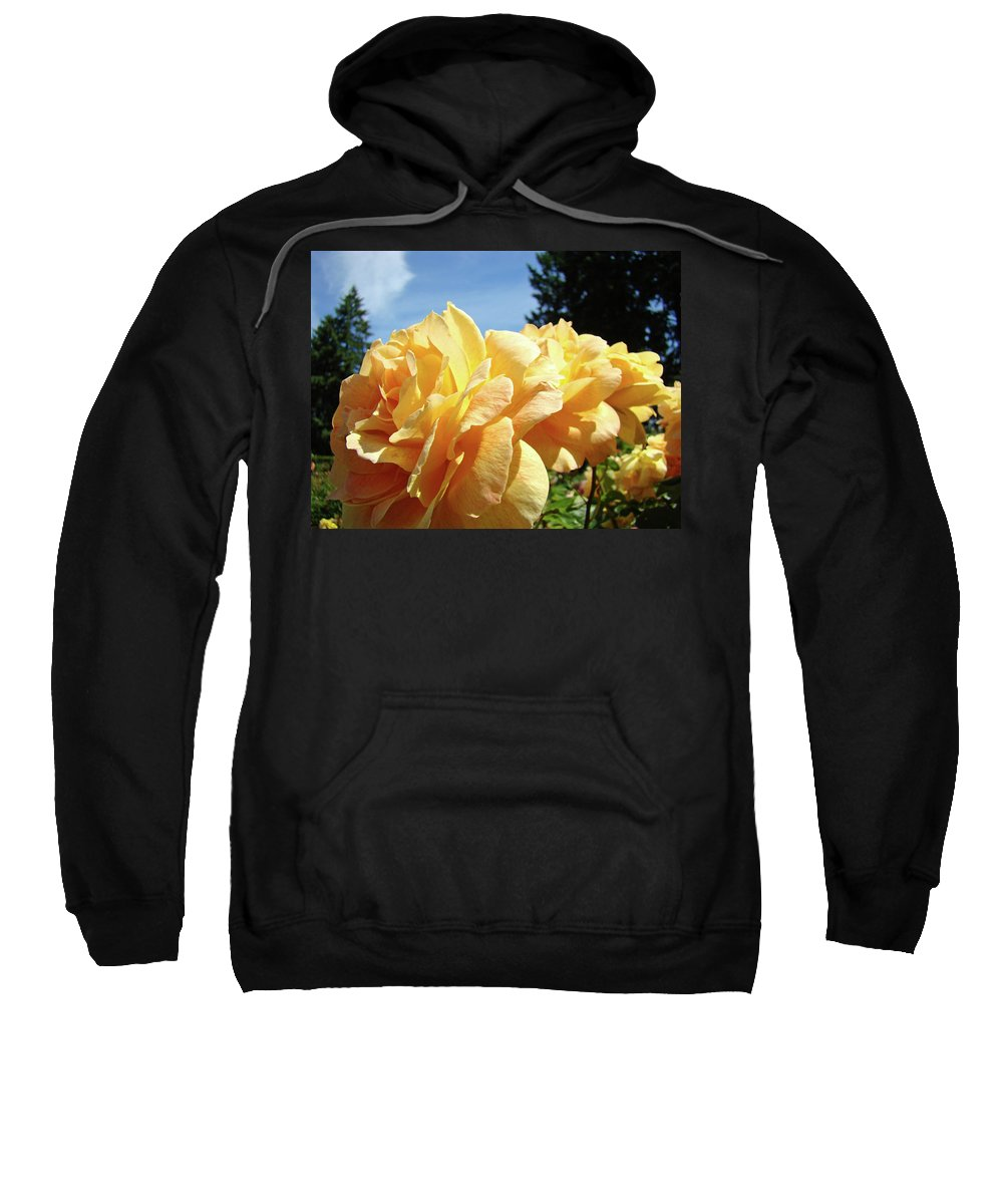 Rose Sweatshirt featuring the photograph Rose Garden Yellow Peach Orange Roses Flowers 3 Botanical Art Baslee Troutman by Baslee Troutman