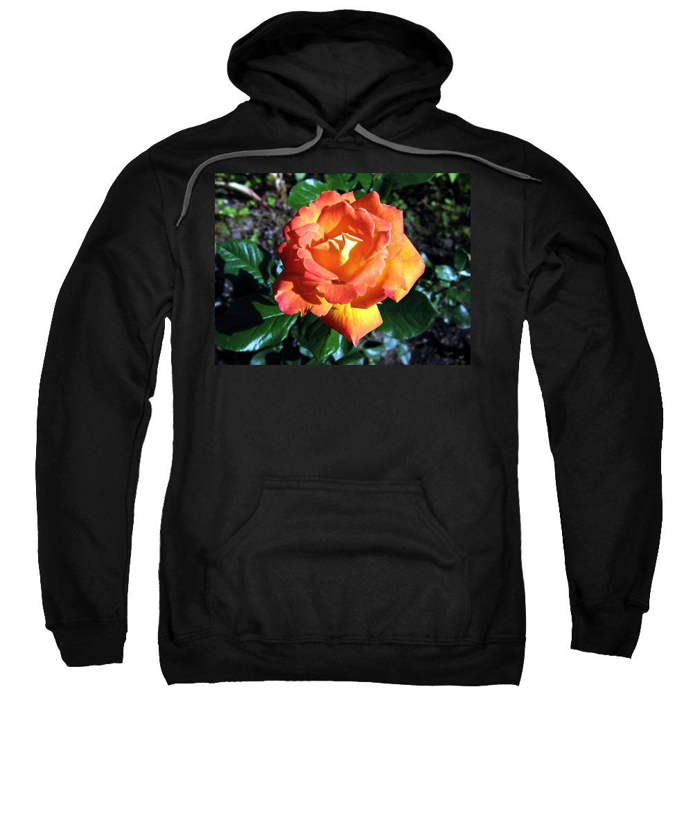 Rose Sweatshirt featuring the photograph Roses 1 by Will Borden