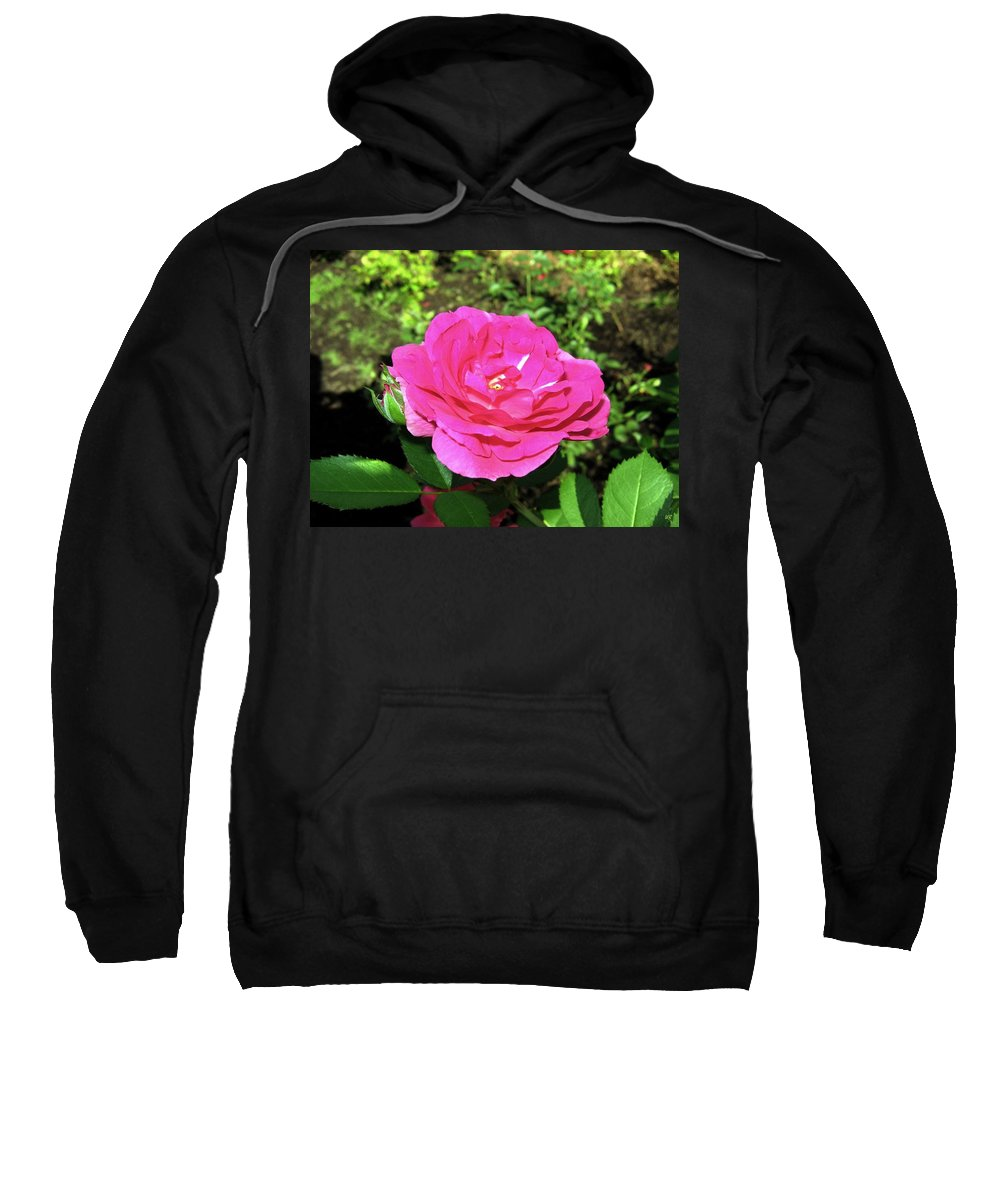 Rose Sweatshirt featuring the photograph Roses 10 by Will Borden