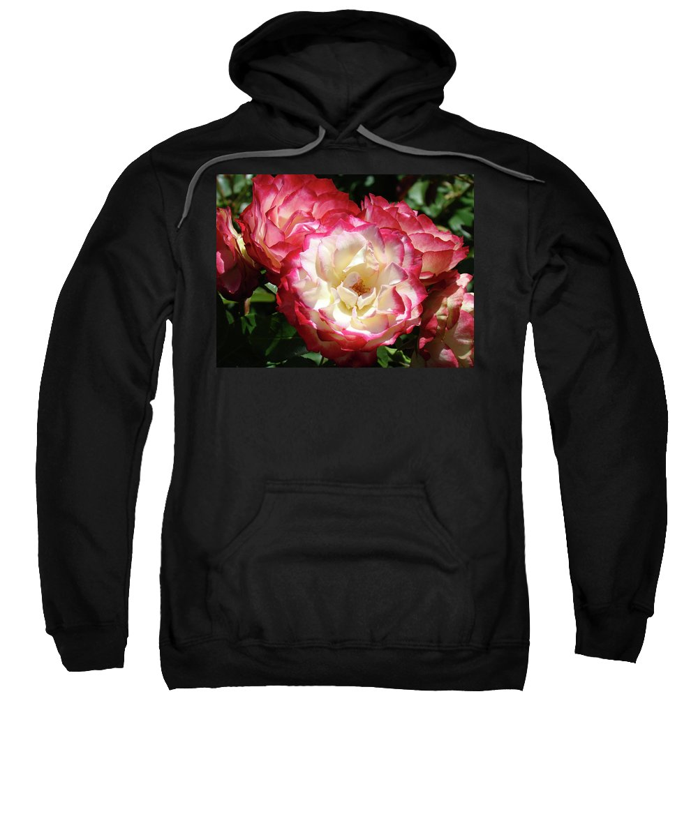 Rose Sweatshirt featuring the photograph Roses Art Prints Pink White Rose Flowers Gifts Baslee Troutman by Baslee Troutman