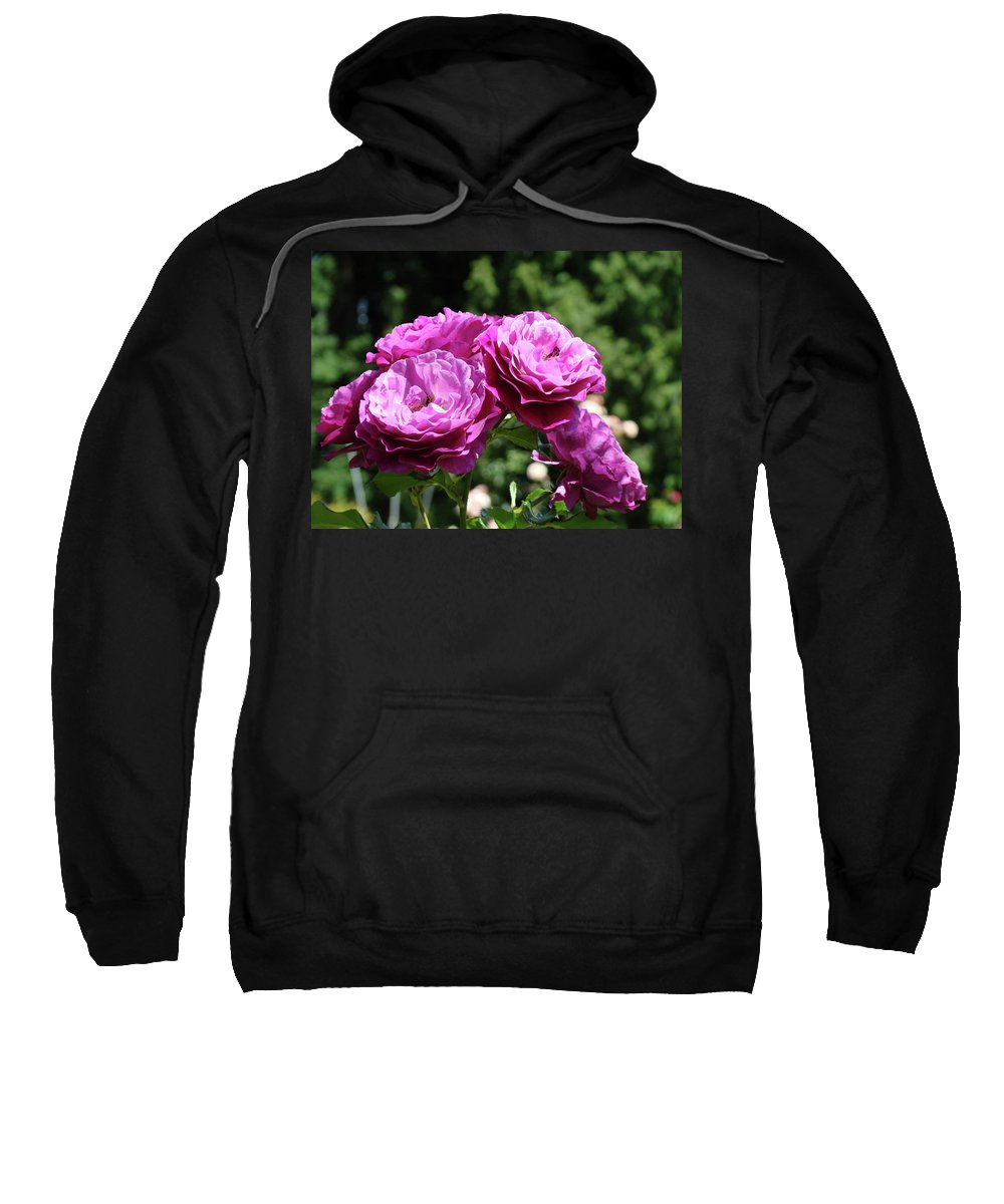 Rose Sweatshirt featuring the photograph Roses Art Rose Garden Pink Purple Floral Prints Baslee Troutman by Baslee Troutman