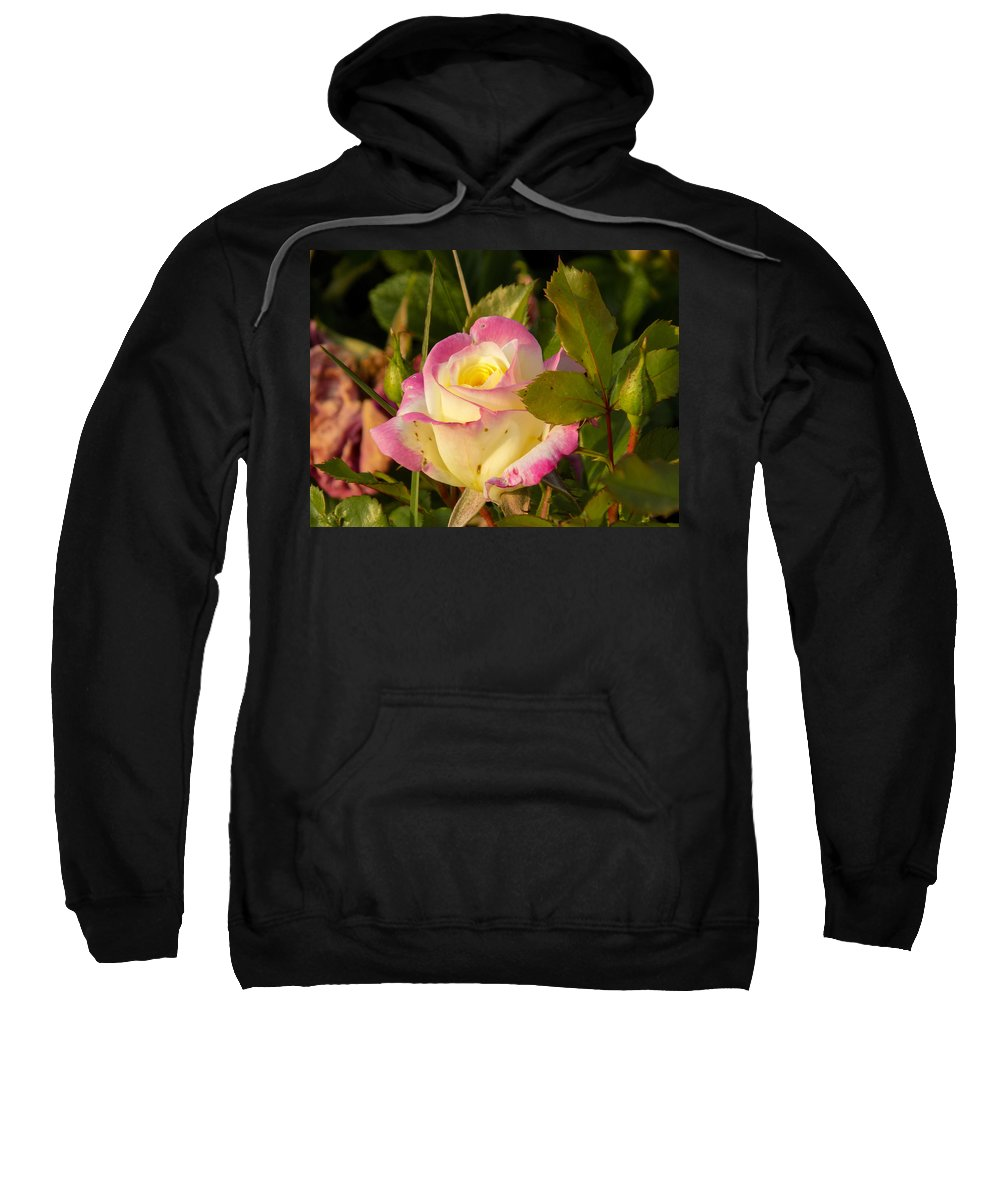 Rose Sweatshirt featuring the photograph Roses Warm Hearts by William Tasker
