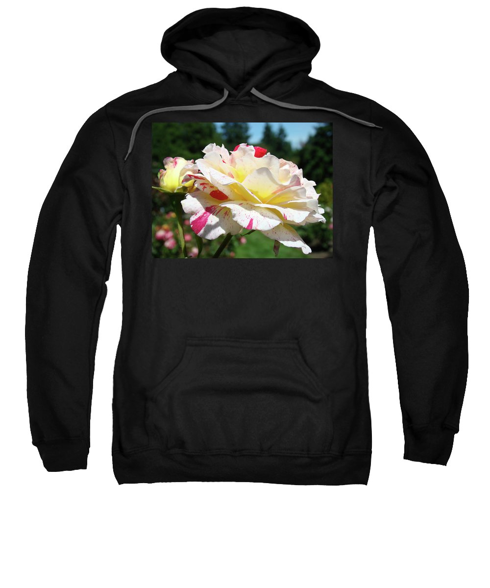 Rose Sweatshirt featuring the photograph Roses White Pink Yellow Rose Flowers 3 Rose Garden Art Baslee Troutman by Baslee Troutman
