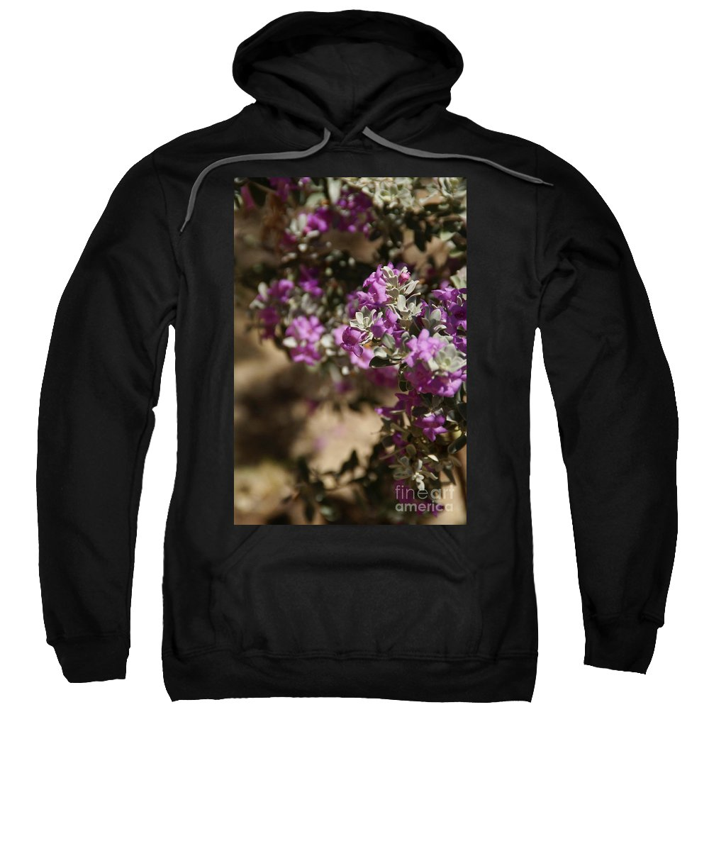 Sage Sweatshirt featuring the photograph Salvia Dorrii by Linda Shafer