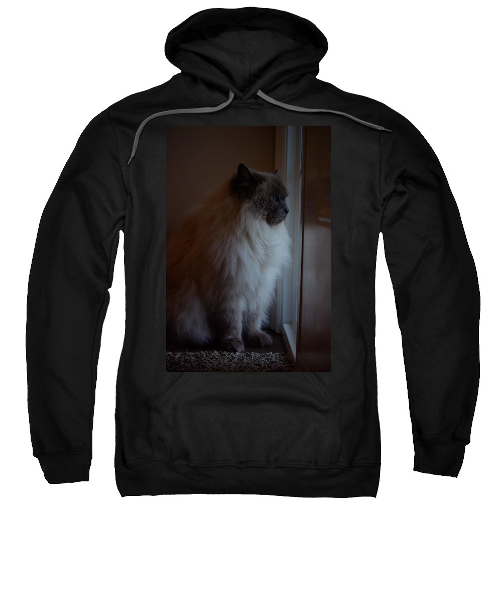Cat Sweatshirt featuring the photograph Sam Waits by Cindy Johnston