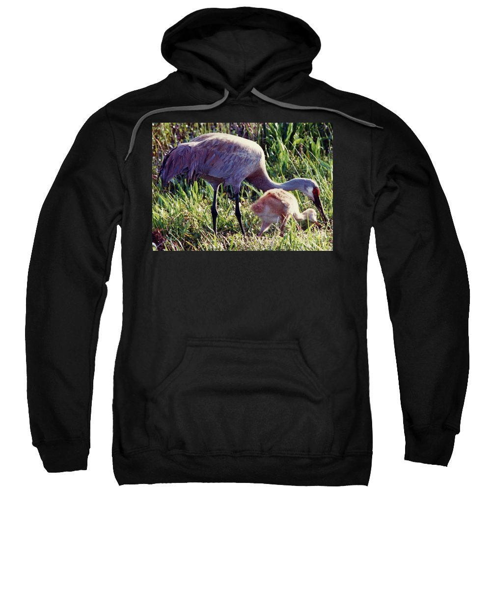 Crane Sweatshirt featuring the photograph Sandhill Crane And Chick by D Hackett