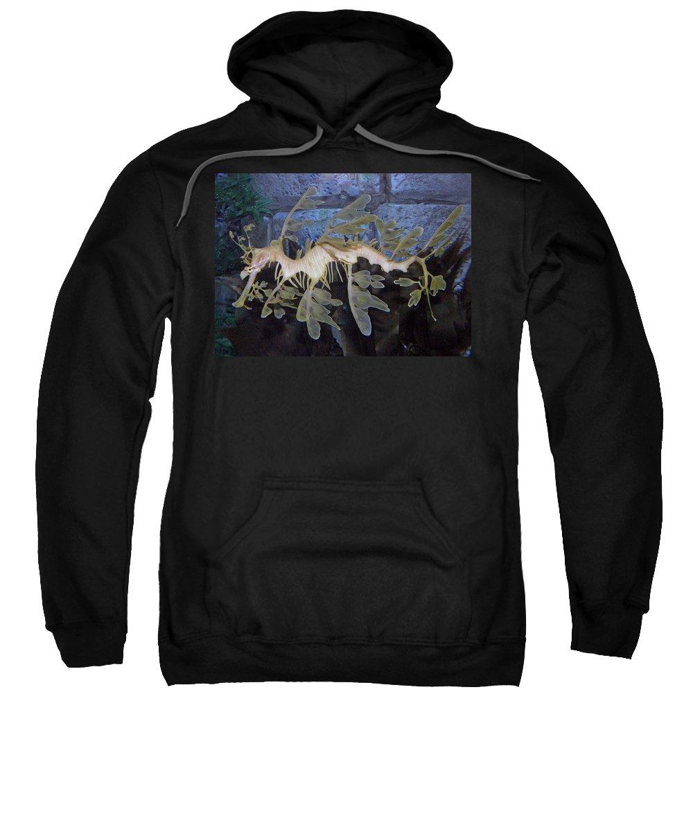 Sea Dragon Sweatshirt featuring the photograph Sea Dragon by Kimberly Mohlenhoff