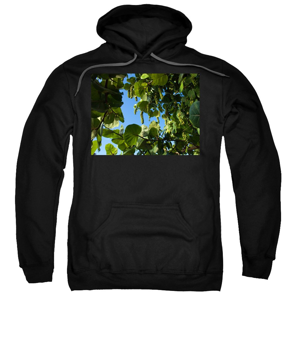 Florida; Sea; Grape; Grapes; Coccoloba; Uvifers; Beach; Green; Ripe; Ripen; Ripening; Summer; Jam; E Sweatshirt featuring the photograph Sea Grapes In Summer by Allan Hughes