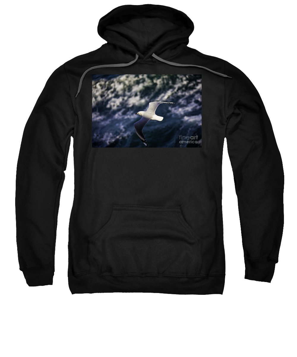 Seagull Sweatshirt featuring the photograph Seagull In Wake by Sheila Smart Fine Art Photography