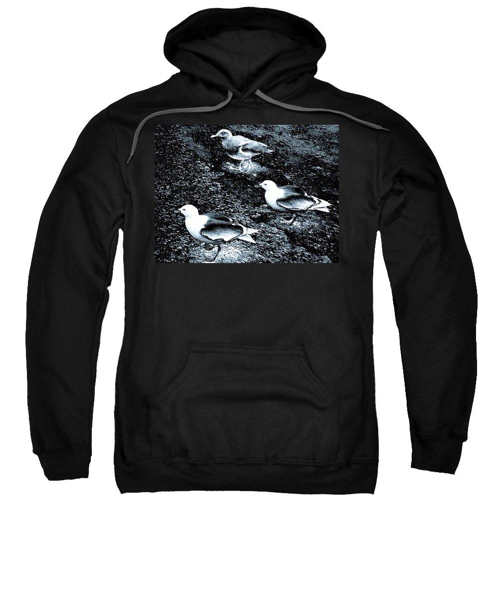 Seagulls Sweatshirt featuring the digital art Seagull Trio by Will Borden