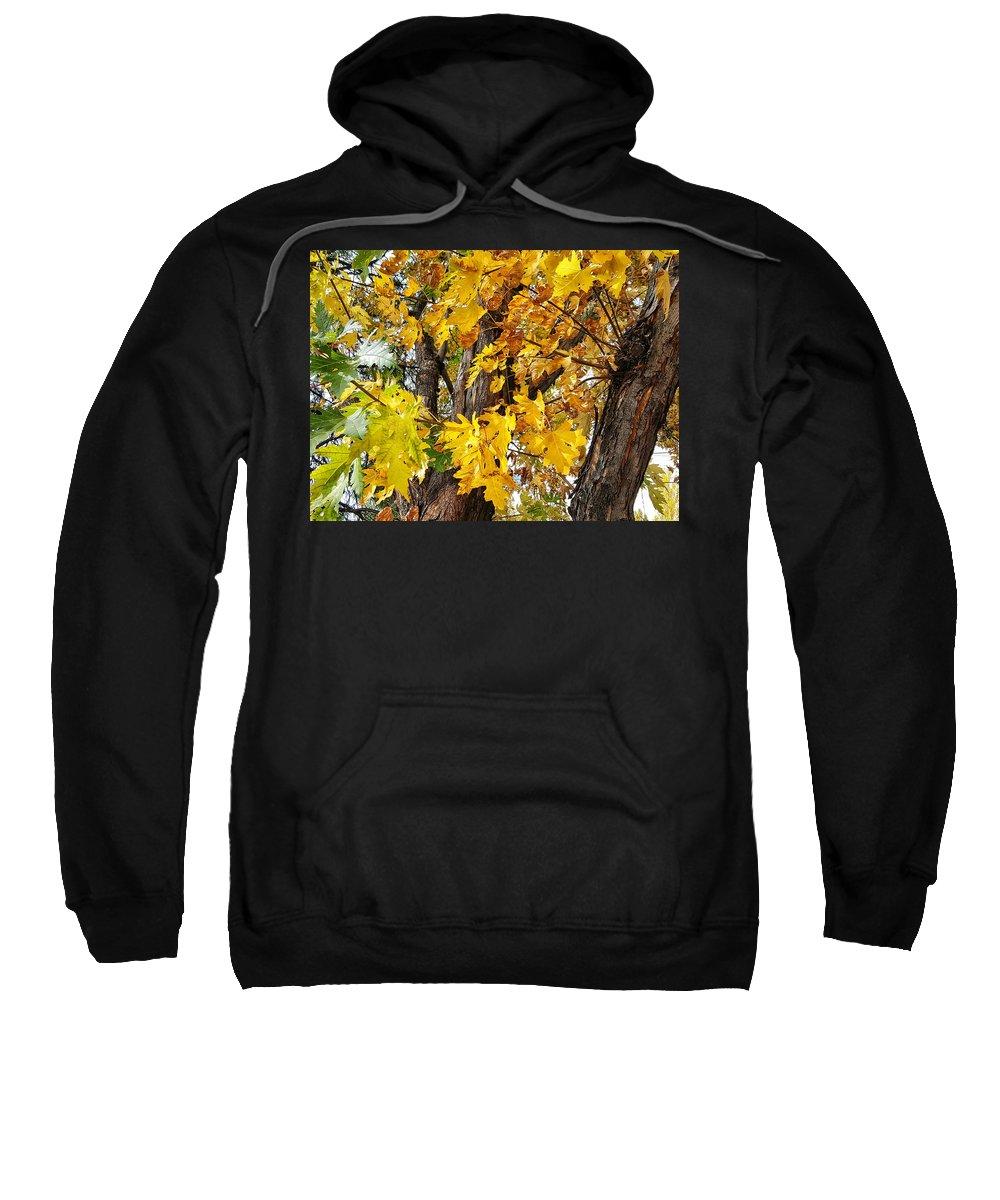 Maple Tree Sweatshirt featuring the photograph Seasons Change by Jim Thomas