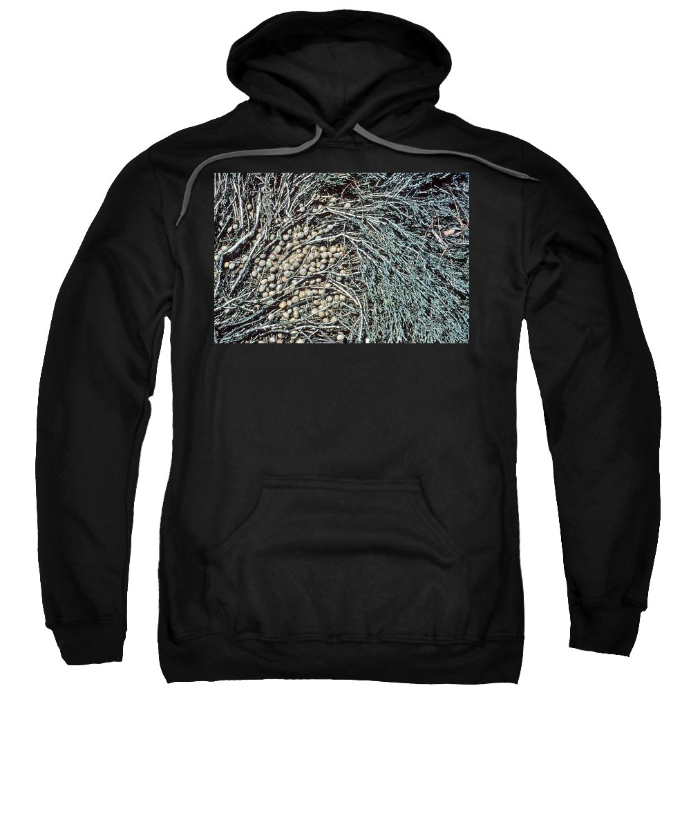 Seeds Sweatshirt featuring the photograph Seeds Of The Sea by Laurie Paci