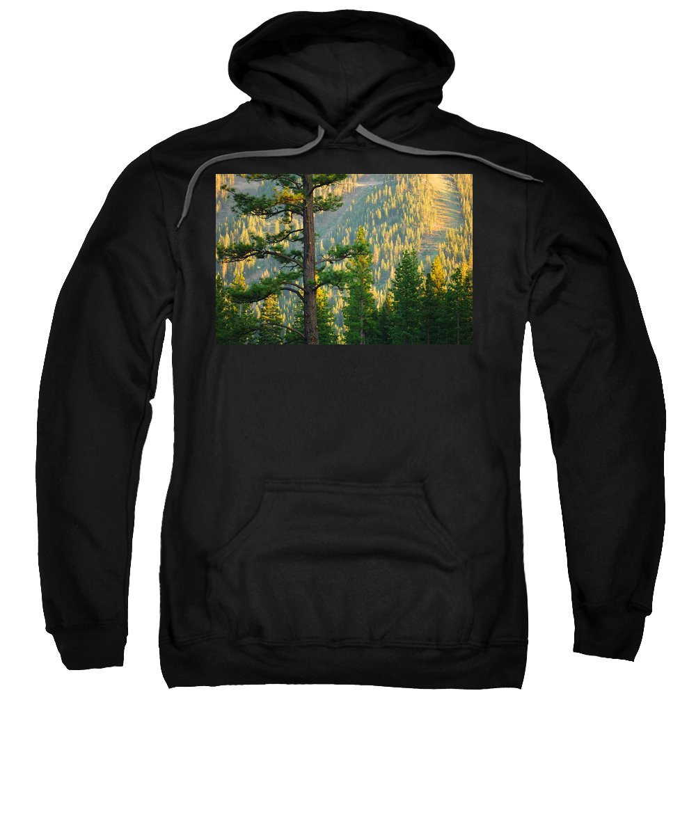 Forest Sweatshirt featuring the photograph Seeing The Forest Through The Tree by Jill Reger