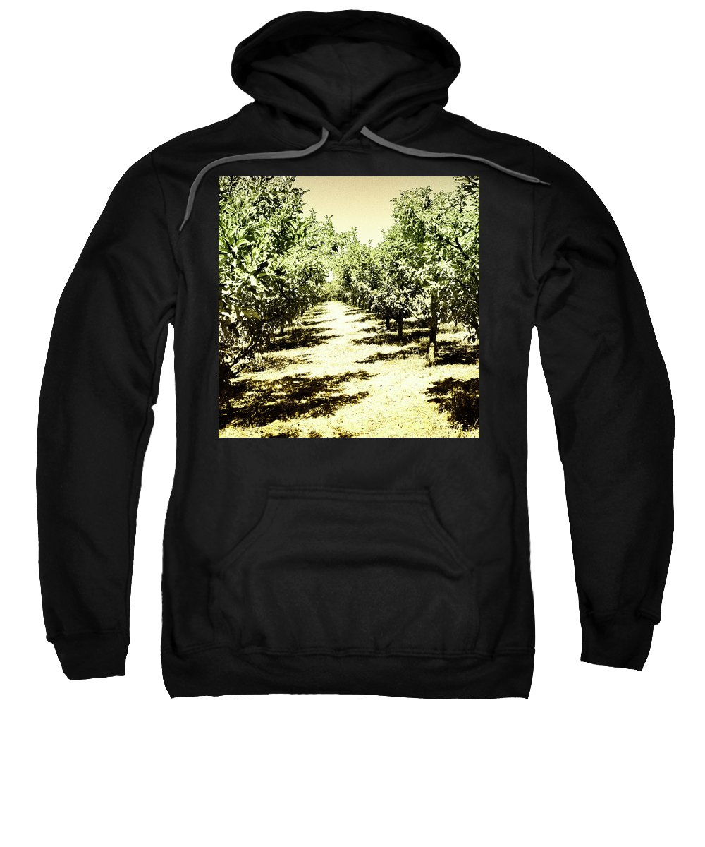 Trees Sweatshirt featuring the photograph Shady Grove Palm Springs by William Dey