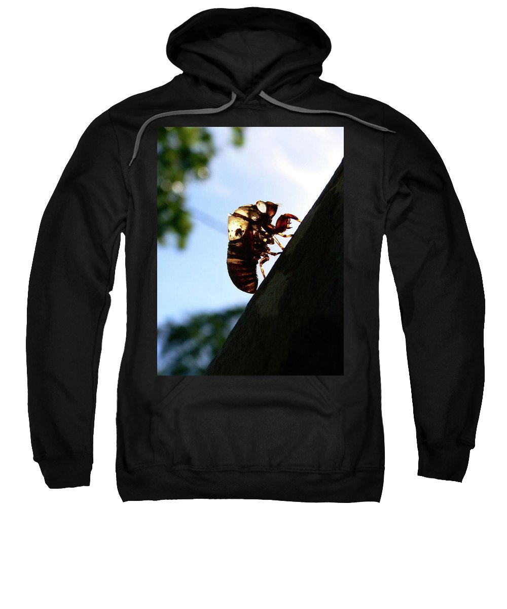Insect Sweatshirt featuring the photograph Shed My Skin by Angela Wright